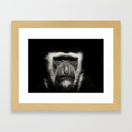 Colobus Monkey Framed Art Print