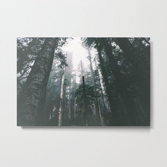 Forest XVIII Metal Print