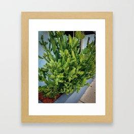 Cactus Green Bright Framed Art Print