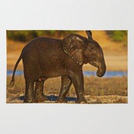 Young african elephant, wildlife Rug