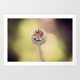 Poppy Pod Art Print