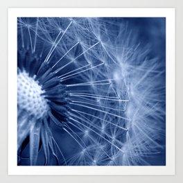 blue dandelion II Art Print