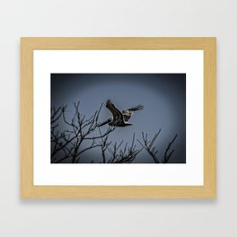 Pelican Breezing Thru The Trees Framed Art Print