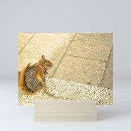 Squirrelly  Sightings Mini Art Print