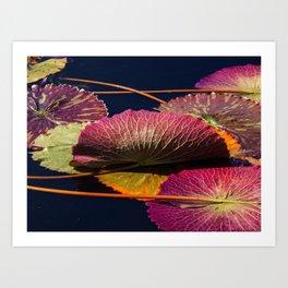 Colorful Nymphaea Tanzanite Lily Pad Leaves Art Print