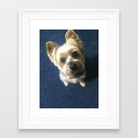 yorkie Framed Art Prints featuring Yorkie by indigo2