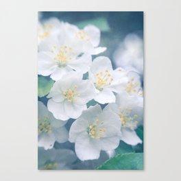 White Cherries Canvas Print