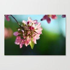Pink Flowers Blue sky Canvas Print