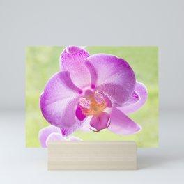 Backlit Iris Mini Art Print