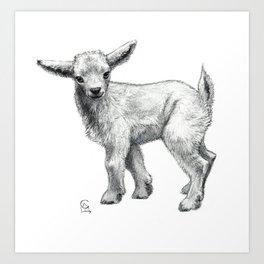Little Goat Baby  SK134 Art Print