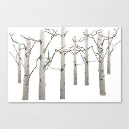 Birch Tree Forest White Bark Aspens Winter Canvas Print