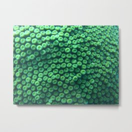 Polyp coral pattern Metal Print