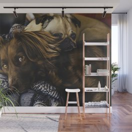 Irish Setter and Pug Relaxing Together Wall Mural