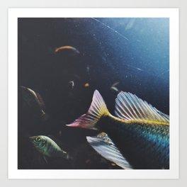 fishy celebration Art Print
