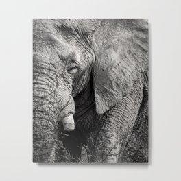 Look of an Elephant Metal Print