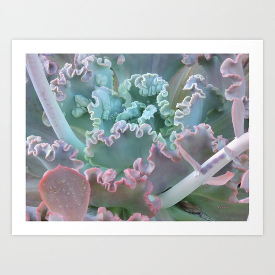 Succulent in the Sand Art Print