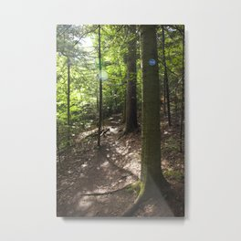 Trail to Baxter Metal Print