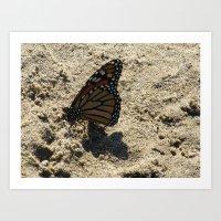 Monarch on the Beach Art Print