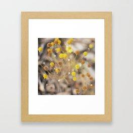 Abstract Botanical - Billy Buttons Framed Art Print