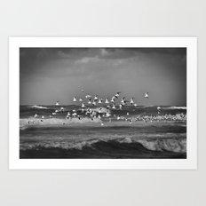 Seagulls flying over the mediterranean sea in Tel Aviv,Israel Art Print