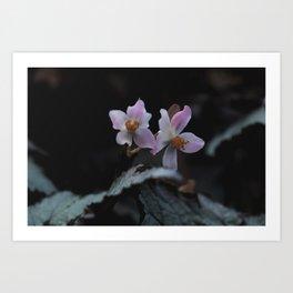 Wildflower Series - Christchurch Botanical Art Print