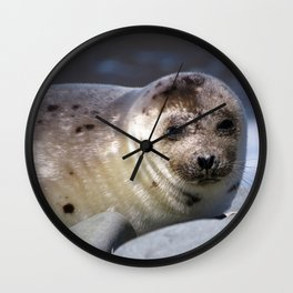 Baby Seal Looking at You Now Wall Clock