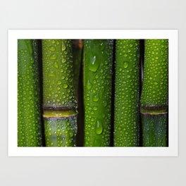 Bamboo rods Art Print
