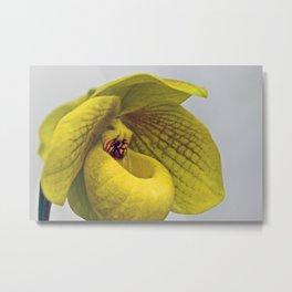 Paphiopedilum Orchid Metal Print