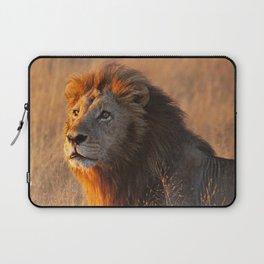 Lion in the morning light, Africa wildlife Laptop Sleeve