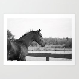 Bubba in Black and White Art Print