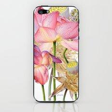 Sacred Lotus Botanical iPhone & iPod Skin