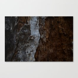 Kings Canyon Tree Canvas Print