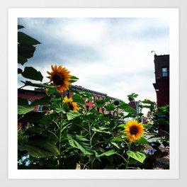 Sunflowers on Main Street - Beacon NY Art Print