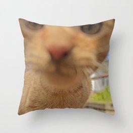 Curious Kitty Throw Pillow