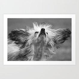 Big Eared Dog Art Print