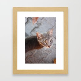 Photograph of a Grey Cat with Green eyes Shot in Bodrum, Turkey Framed Art Print