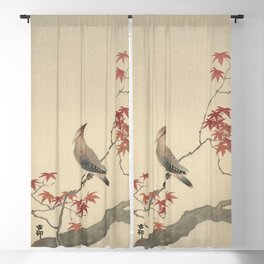 Japanese Maple Songbird  Blackout Curtain