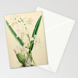 Laelia Albida var Rosea Stationery Cards