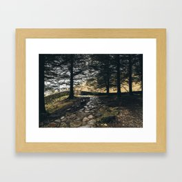 Stone path in woodland at Blea Tarn. Cumbria, UK. Framed Art Print