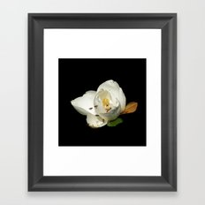 Magnolia with Bees on Black DPG150523a Framed Art Print