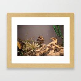 Owlet Framed Art Print