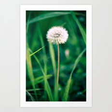 Fluffy Flower Art Print