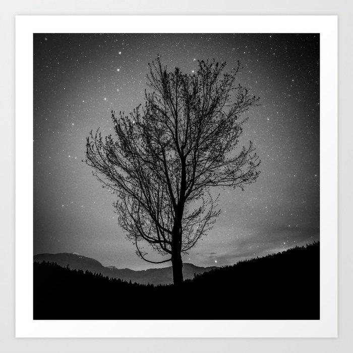 Lost lake solo tree Art Print