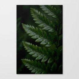 Fern Dew Canvas Print