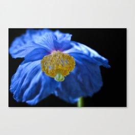 Blue Himalayan Poppy Flower Canvas Print