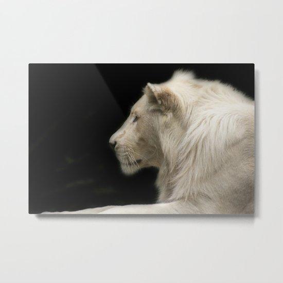 Young white lion Metal Print