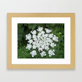 Cozy Queens Anne's Lace Framed Art Print