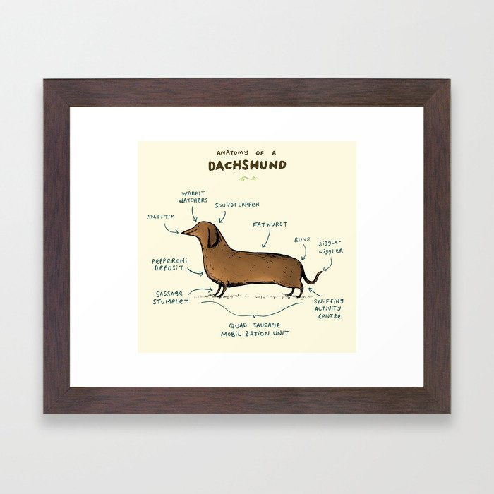 Anatomy of a Dachshund Framed Art Print