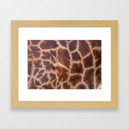 Giraffe Fur Framed Art Print