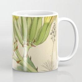 Agave fourcroydes, Asparagaceae, Agavoideae Coffee Mug